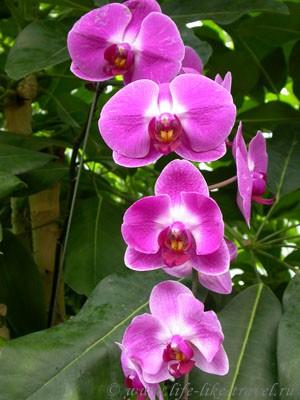 Гонконг, рынок птиц и орхидей