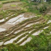 Филиппины, Рисовые террасы Банауэ, Ифугао