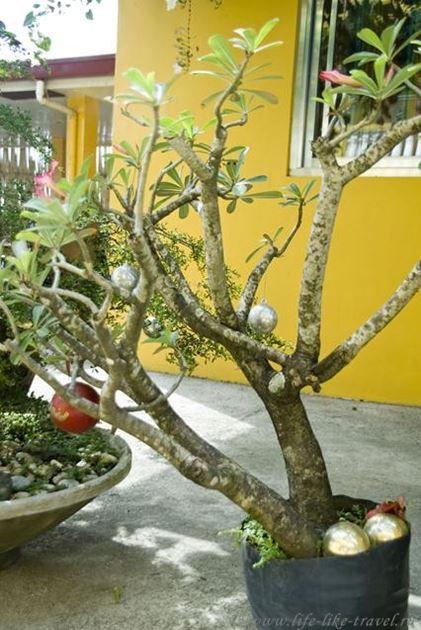 Филиппины, Талисай, Рождественское дерево