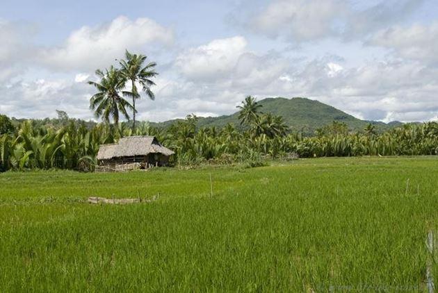 Филиппины, остров Бохол, Рисовые поля