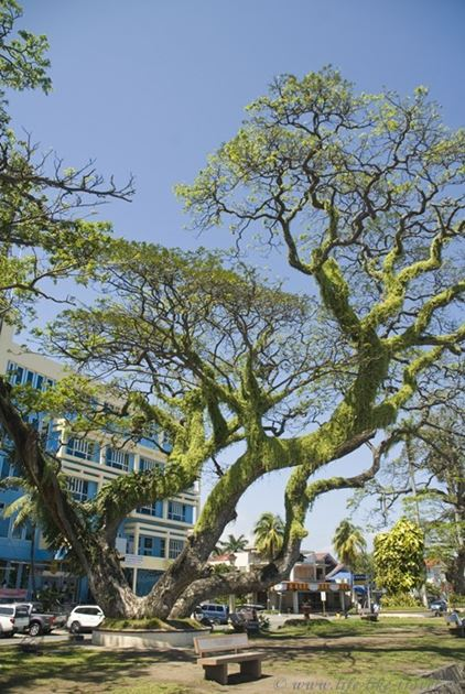 Бульвар Рисаль, Думагете, остров Негрос, Филиппины