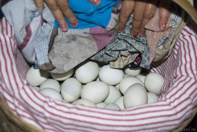Яйца балот с зародышем цыпленка, Филиппины