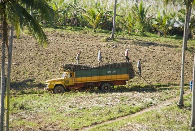 Плантация, окрестности Думагете, остров Негрос, Филиппины