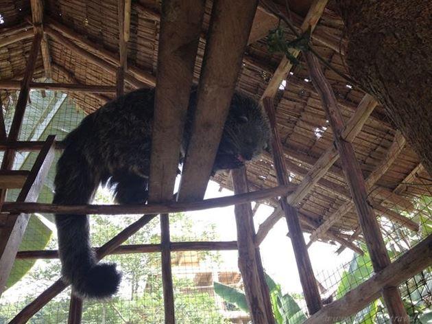 Филиппины, остров Палаван, Эль Нидо, Палаванский медведь