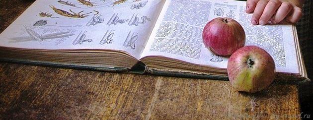 Отец яблок