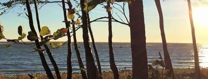Сестрорецк в октябре, парк «Дубки» и балтийское взморье, фотоотчет