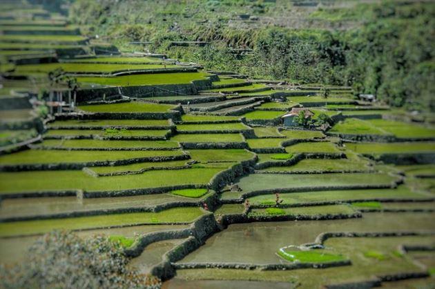 Рисовые террасы Малайзия