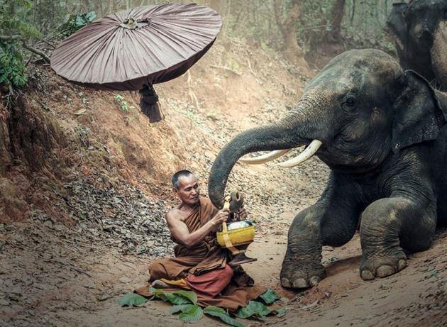 деревня слонов в Патайе