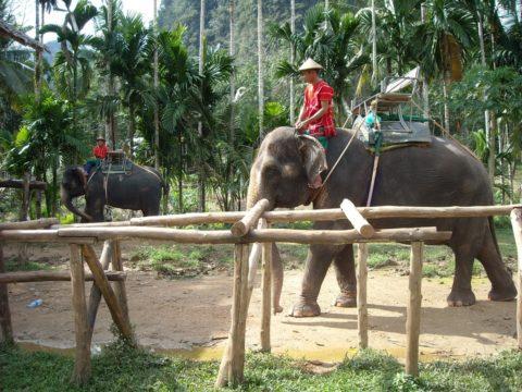 таиланд слоны