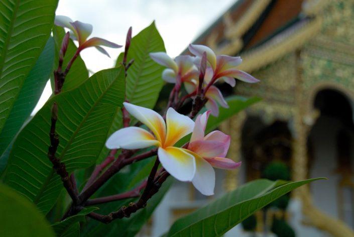 Таиланд Чиангмай (Chiangmai)