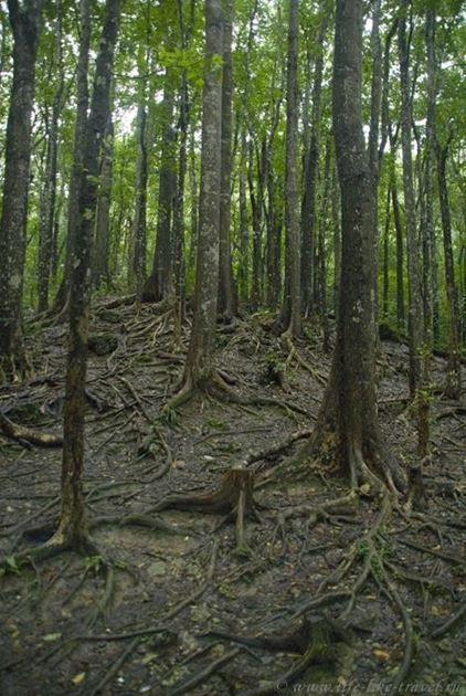 Филиппины, остров Бохол, Сказочный лес