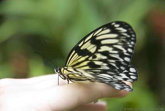 Филиппины, остров Бохол, Парк бабочек