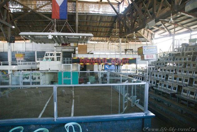 Петушиные бои, Думагете, остров Негрос, Филиппины
