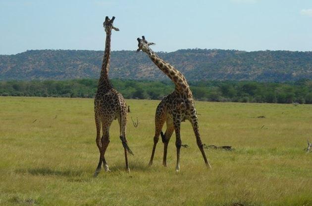 Один день из жизни в Африке: уйти в буш в Ботсване, Маун, Ната, Касане и парк Чобе