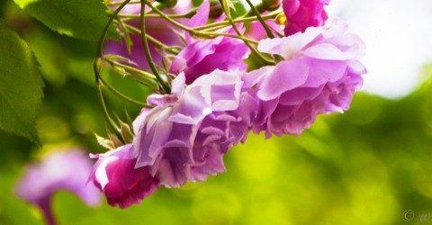 Краски жизни - цвет радуги