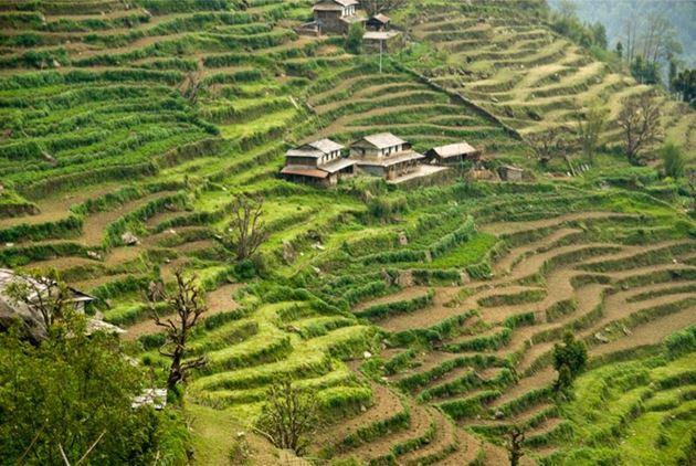 Тадапани, Непал, Гималаи, трек к базовому лагерю Аннапурны ABC