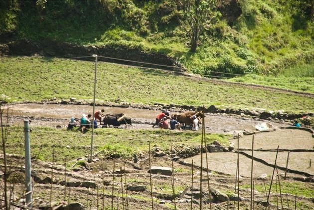 Фото Непала: самостоятельно в Покхару, Катманду, Гималаи, трек к базовому лагерю Аннапурны ABC