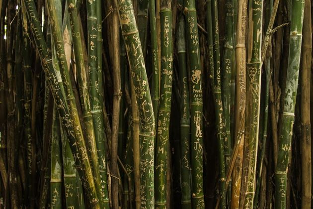 Бамбук Малайзия
