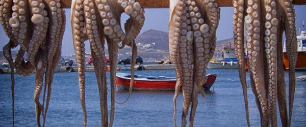 осьминоги греция