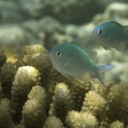 Подводный мир Мальдивы