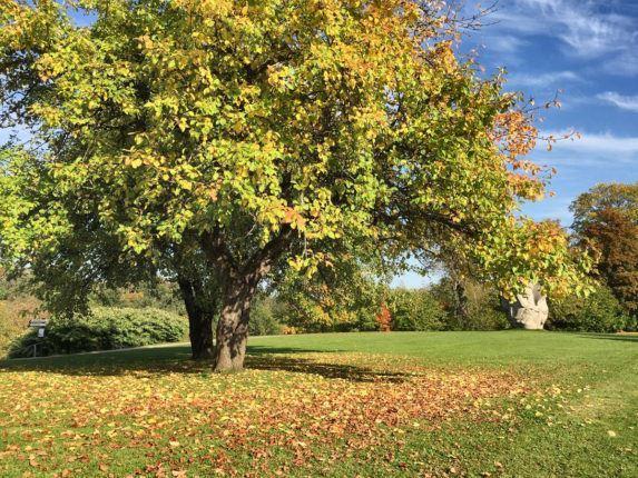 Латвия, Сигулда, осень октябрь