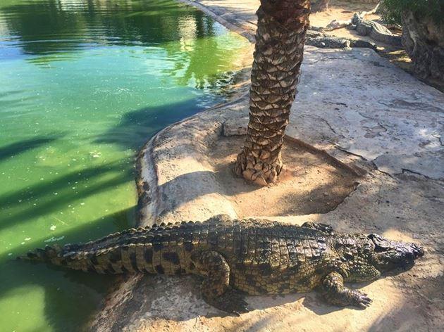Крокодиловая ферма, Тунис
