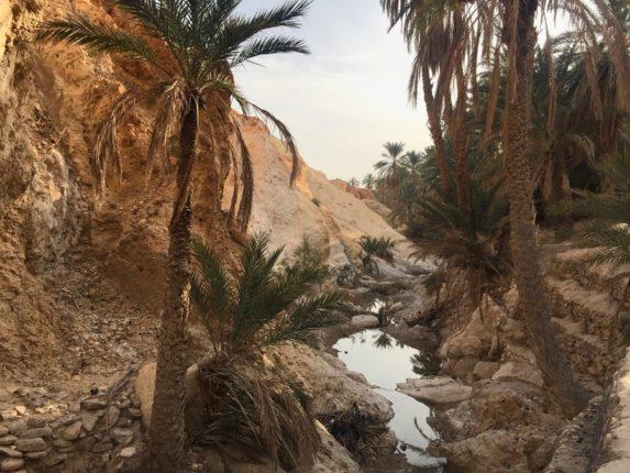 Чебика, Тунис