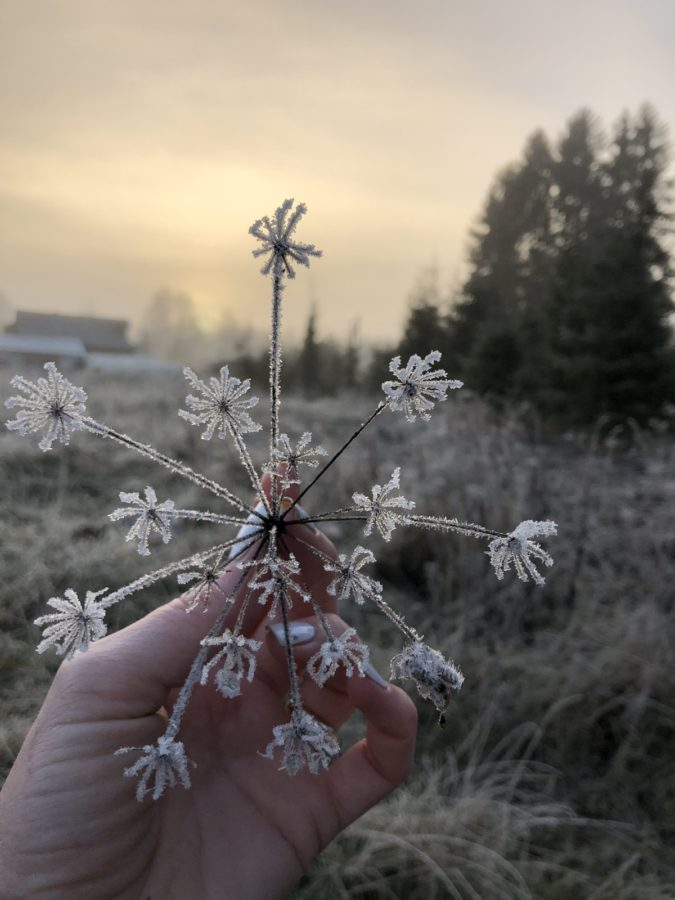 Морозное утро в Осташкове, Тверская область