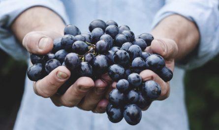 Испанские виноградники